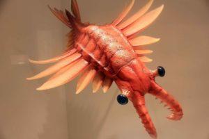 crostacei preistorici del cambriano