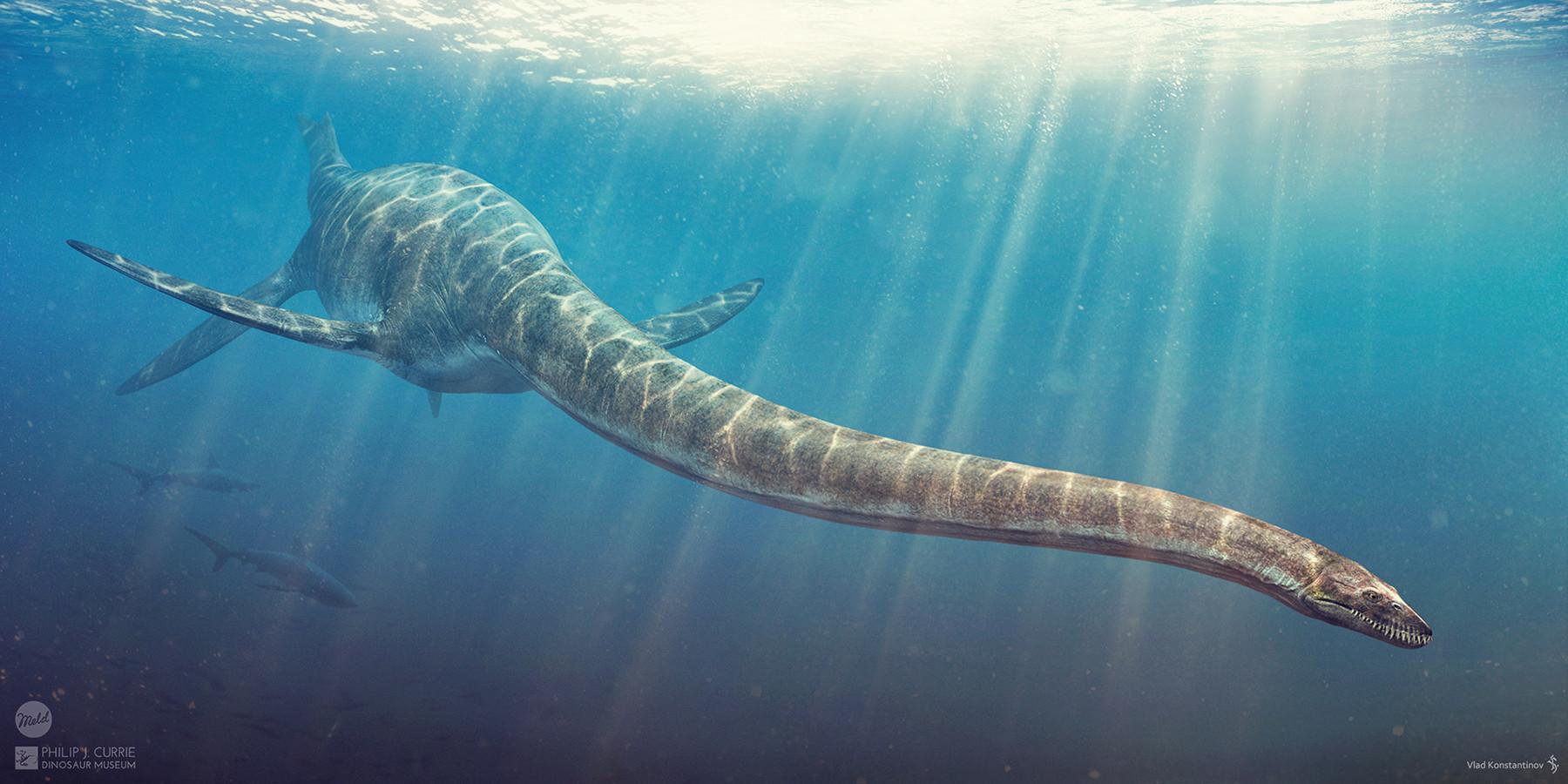 Dinosauri marini Plesiosauro
