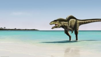Acrocanthosaurus su una spiaggia preistorica
