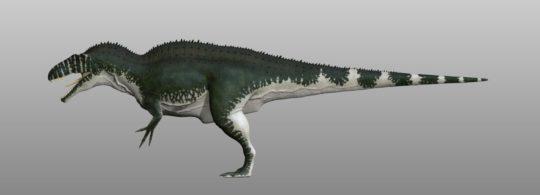 acrocanthosaurus lato sx